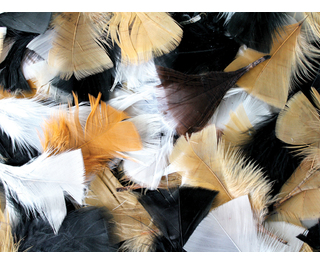 Feathers Assorted Natural 50g
