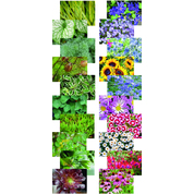 Nature's Blooms Picture Pack A4 40 Sheet