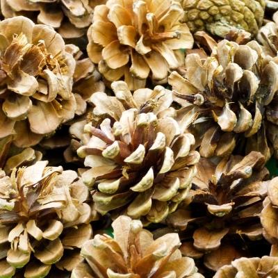 Pine Cones 250g