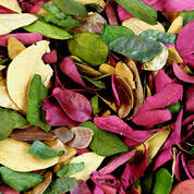 Dried Coloured Leaves 50g