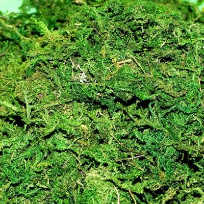 Natural Moss 100g