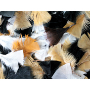 Gompels Feathers Assorted Natural 50g